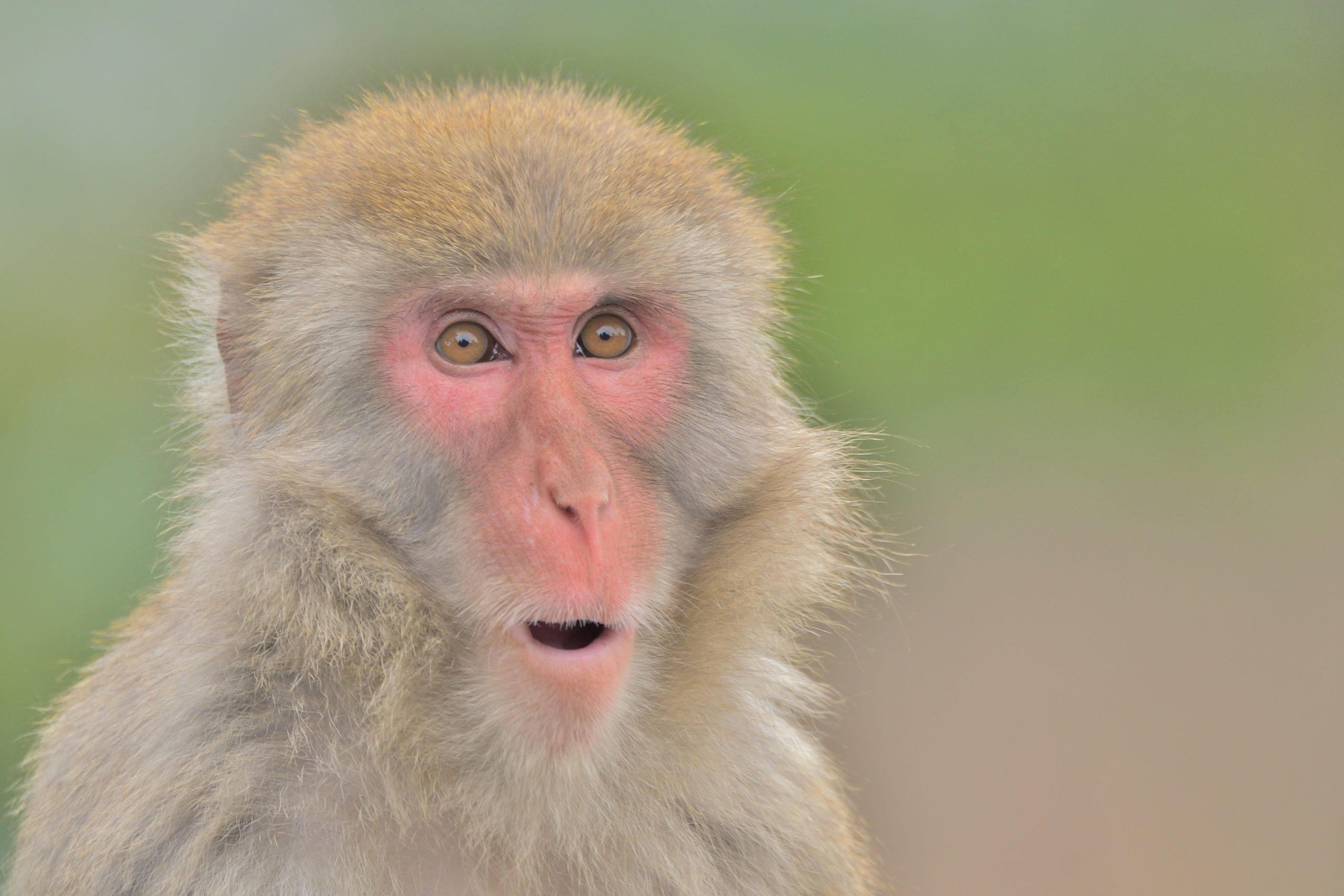 サルの画像