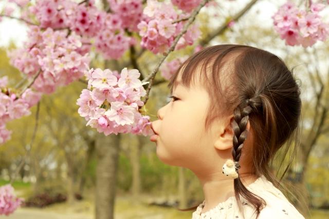女の子と桜の画像